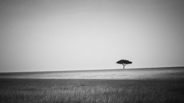 Savannah_Lilian_Blot_by_a_Blot_on_the_landscape